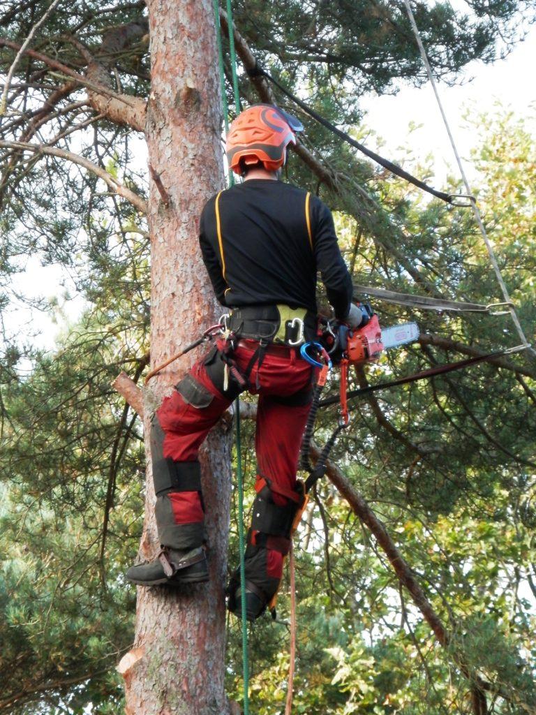Svensk Trädfällning Arborist