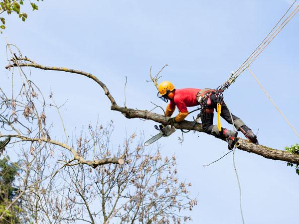 arborist-in-action