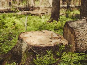 skogsavverkning-blurb